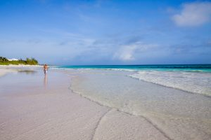 Three Bees at Harbour Island | Pink Sand Beach