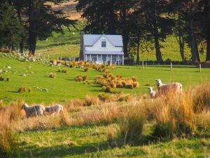 Annandale | Shepherds Cottage Grounds