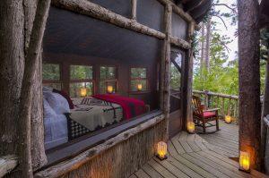 Dry Island | Tree House